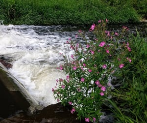 flowers, pink flowers, and waterfall image