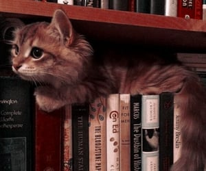 cat, books, and kitten image