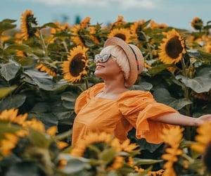 canada, chilliwack, and sunflower image