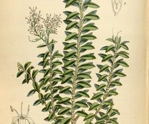 botany, #hernaturalhistory, and artist:name=matilda smith image