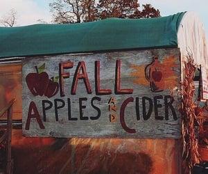 Fall 🍂😌
