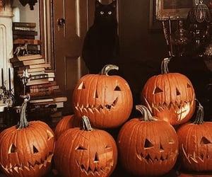 pumpkin, autumn, and cat image