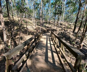 adventure, bridge, and outdoors image