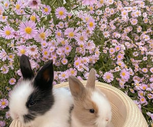 rabbit and flowers image
