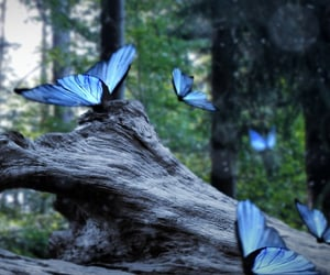 blue, butterflies, and butterfly image