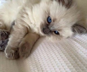 cats, cat, kitten and kittens