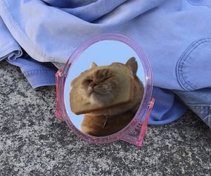 background, cat, and mirror image