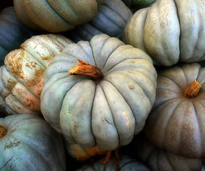 pumpkin and autumn image