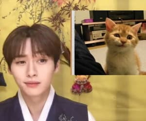cat, minho, and stray kids image