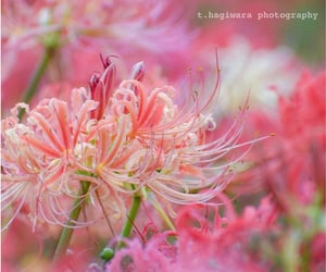 bokeh, flora, and summer flowers image