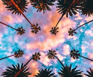 palm tree, sky, and wallpapers image