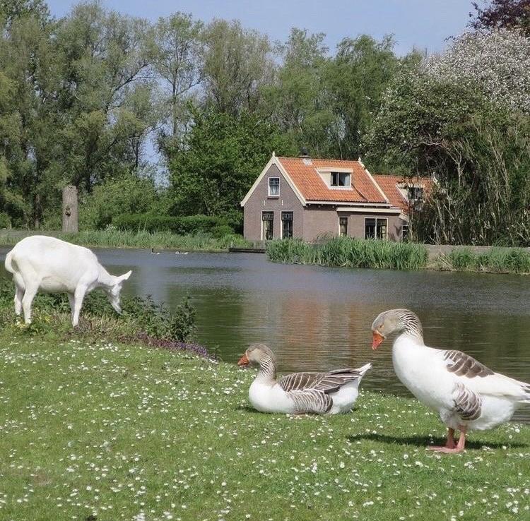 nature, animals, and cottagecore image