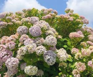 aesthetics, flowers, and garden image