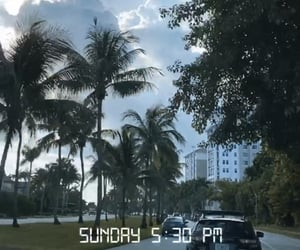aesthetic, florida, and palm trees image