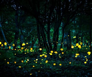fireflies, forest, and trees image