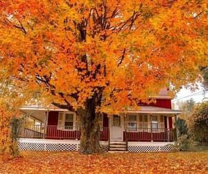 autumn, cozy, and crispy weather image