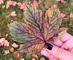canada, fall, and nails image