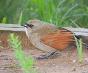 Animais, ave, and bird image