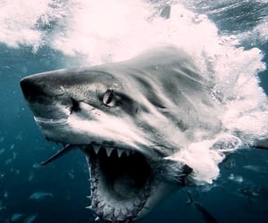 beautiful guy and big shark image