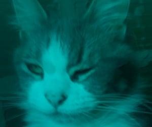 beautiful, cat, and kittie image