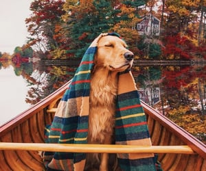 autumn, cosy, and dogs image
