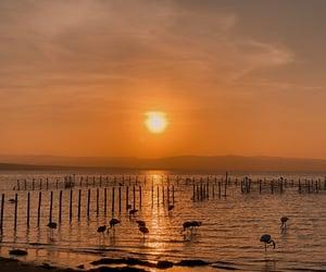 birds, flamingo, and landscape image