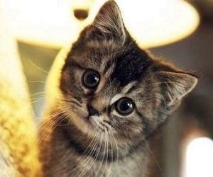 Animais, filhote, and gato image