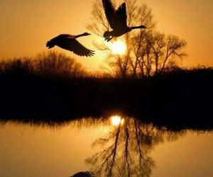 bird, sunset, and nature image