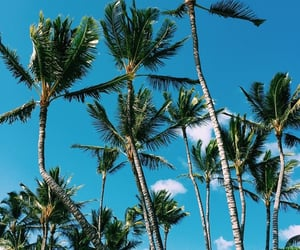 cool, palm tree, and summer image