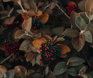 berries, forest, and leaves image