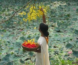 flowers, india, and kerala image