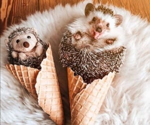 animals and hedgehog image