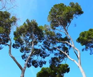 madrid, trees, and paisaje image