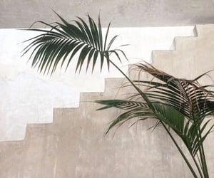 beach and palm tree image
