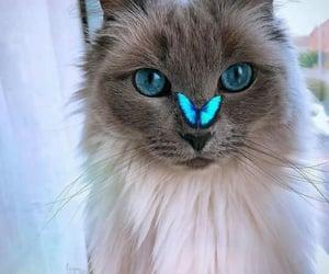 animals, beautiful, and blue image
