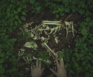 bones, enchanted, and forest image