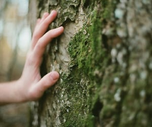 forest, hand, and tree image