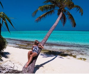 beach, Maldives, and palm tree image