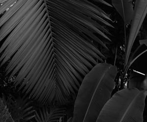 aesthetic, black and white, and plants image