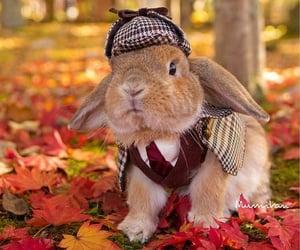 bunny and rabbit image