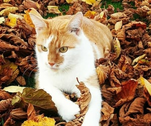 adorable, aesthetic, and autumn image