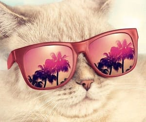 cats, lentes, and playa image