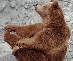 bear, animal, and happy image