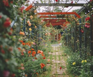 garden, beautiful, and colors image