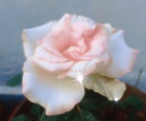 flowers, rose, and kira kira image