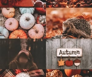 autumn, cats, and home decoration image