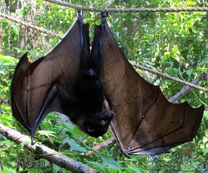 aesthetic, alternative, and bats image