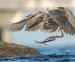 bird, landing, and wildlife image