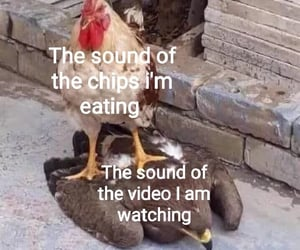 birds, chewing, and chips image