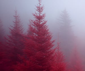 fir trees, grove, and infrared image